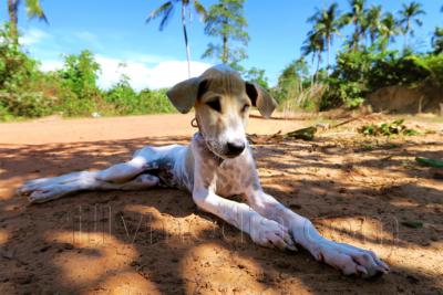 Hundeportrait - zillymedia