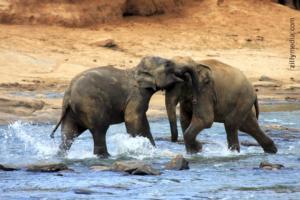 Elefanten -zillymedia